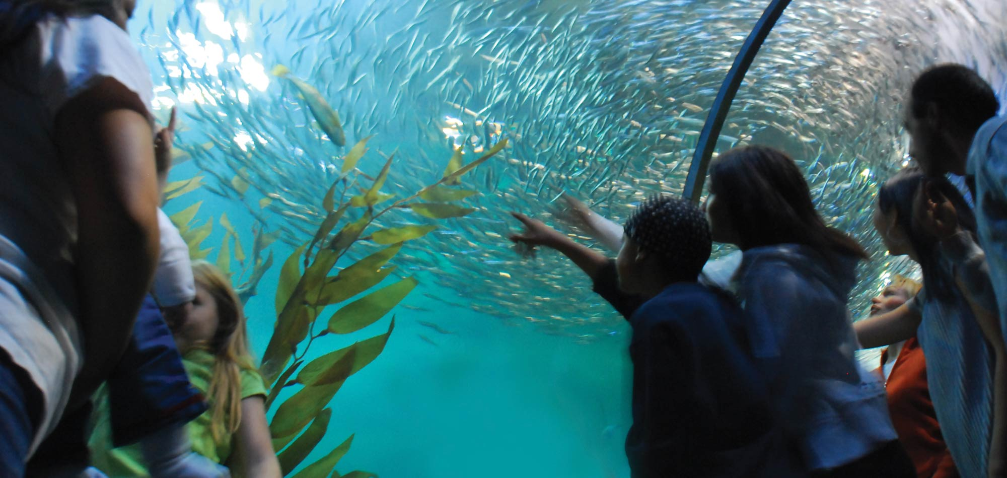 Closest Aquarium | Aquarium Of The Bay Home To More Than 20 000 Marine Animals